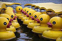 黄鸭子游船