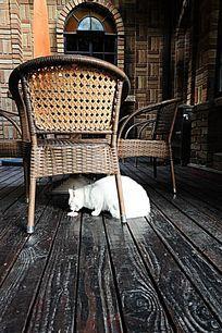 老别墅里贪吃的白猫