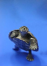 站立的黄头侧忍者神龟