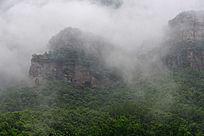 太行山雨中植被景色