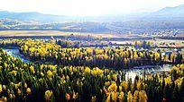 新疆秋色森林