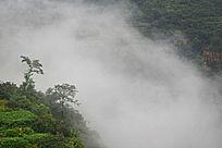 云海中的太行植被