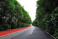 森林中道路