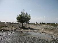 溪边的独树