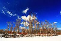 早春的雪原红柳风景