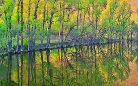 河岸绿树林