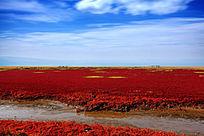 红海滩湿地