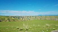 荒凉的草原
