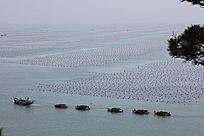 满仓归来的渔船