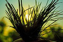 小草的黄昏