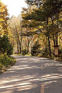 秋天公园道路