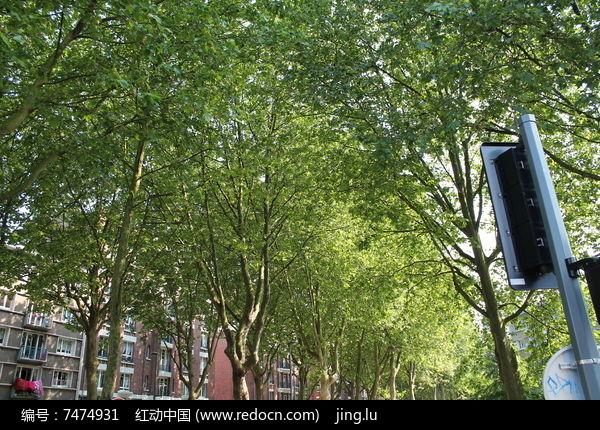 树荫图片,高清大图_树木枝叶素材