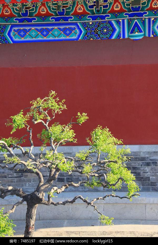 牡丹园内绿植图片