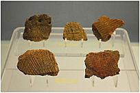 万年仙人洞遗址出土陶片