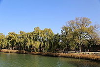 颐和园昆明湖岸垂柳