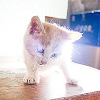 白色的小猫眼神