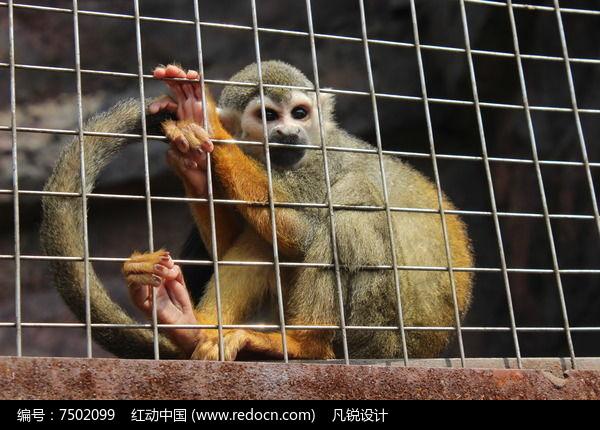 动物园笼子中的猴子