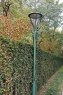 绿色的冬青树墙