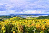 雄厚的森林资源