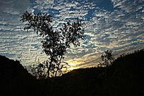 夕阳山岭蓝天白云下的树影
