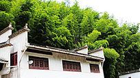 竹林下的房子