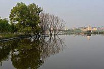 城市公园湿地