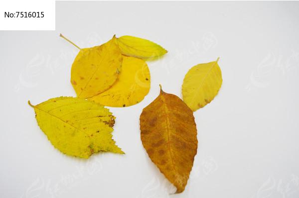 原创摄影图 动物植物 树木枝叶 多片落叶