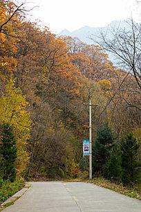 秋天山林道路
