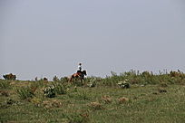 草原上的骑士