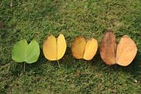 地上的落叶