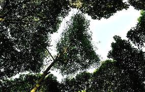 密林缝隙里生长的树