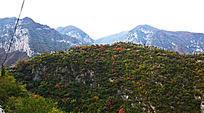 山峰上的植被-山峰景观