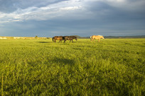 阳光下的大草原