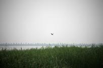 低空飞行的鸟