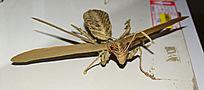螳螂工艺品制作-手工编织