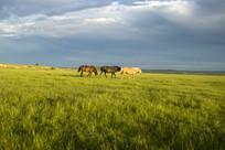 广阔的大草原
