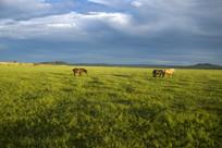 绿色的大草原