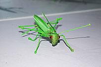 蚂蚱编织艺术-手工编织