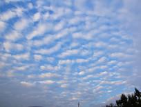 美丽的鱼鳞云
