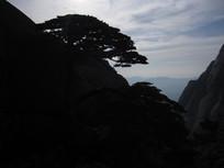 黄山松树风景图片