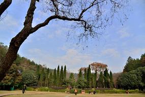 四方山生态植物园里的景观树