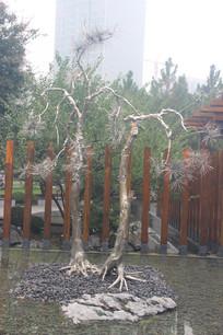 针叶树雕塑