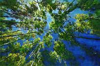 电脑画《绿色树林》