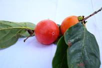红色的柿子和绿色的叶子