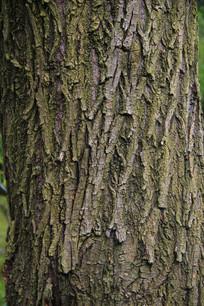 树干材质贴图