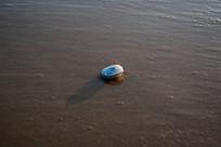 细腻沙滩上的贝壳