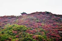 薄雾中的山景-秋季红叶景观