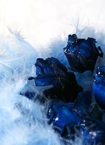 被羽毛包裹着的蓝妖姬