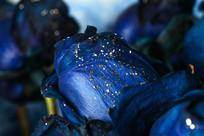 带星星的蓝色妖姬
