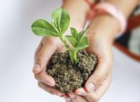 呵护绿苗成长